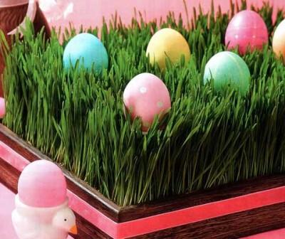 Как организовать мини-лужайку для пасхальных яиц