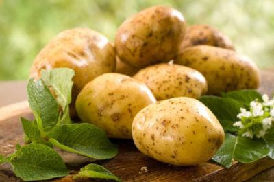 Вкусные рецепты салатов из молодого картофеля